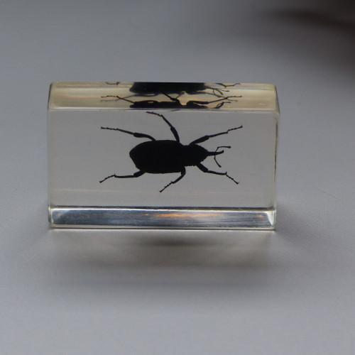 Inclusion de scarabée