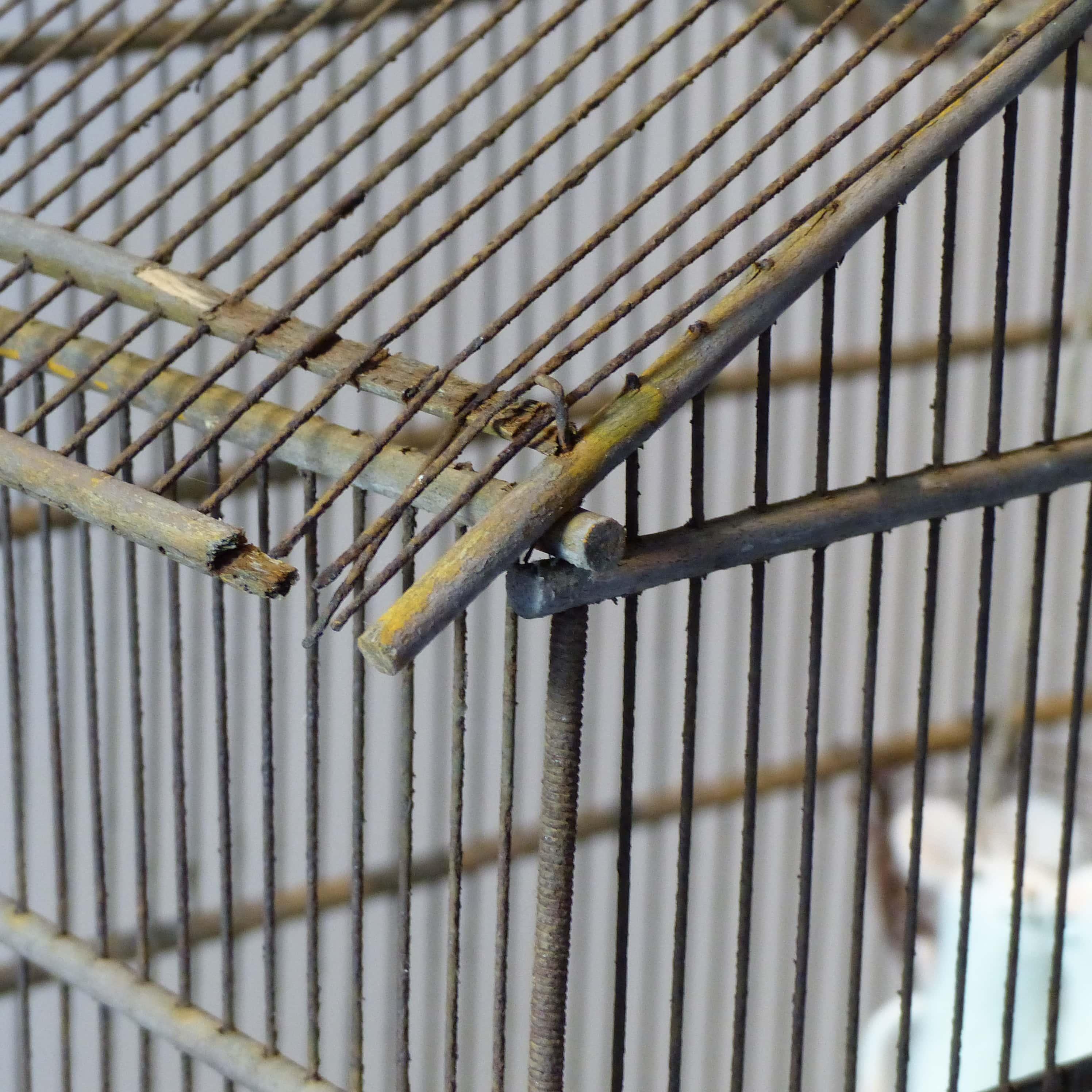 Ancienne cage oiseaux en bois et grillage for Cages a oiseaux decoratives
